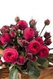 Bunch red Peony- roses Royalty Free Stock Photo