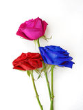 Bunch of red, pink and blue roses isolated on white. Royalty Free Stock Photography