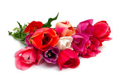 Bunch of red and pink tulips over white Stock Photography