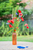 Bunch of of red poppies and cornflowers Royalty Free Stock Image