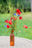 Bunch of of red poppies and cornflowers Stock Photos