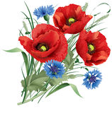 Bunch of red poppy flower, blue cornflakes and hare's-foot clove Stock Photo