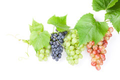 Bunch of red, purple and white grapes Royalty Free Stock Images
