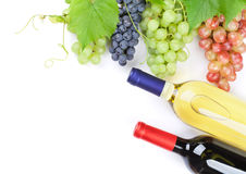 Bunch of red, purple and white grapes and wine Royalty Free Stock Photos