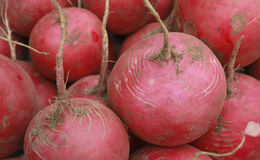 A bunch of red radish Stock Photography