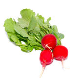 Bunch of red radish Stock Photos