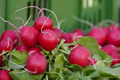 Bunch of red radish, copy space. Bunch of fresh red radish on the market, closeup, copy space Stock Photography