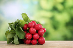 Bunch of red radish in summer with copyspace Royalty Free Stock Images