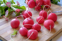 Bunch of red radishes landscape side wide Stock Image