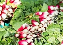 Bunch of red radishes on a market. Bunch of fresh red radishes on a market Stock Images