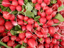 Bunch of red radishes sold at the market. A bunch of red radishes sold at the market Royalty Free Stock Image