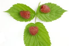 Bunch of a red raspberry. On a white background Royalty Free Stock Images