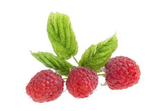 Bunch of a red raspberry isolated on white. Background Stock Photos