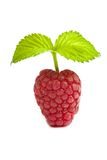 Bunch of a red raspberry on a white background. Close up macro s Stock Photos