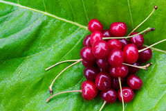 Bunch of red ripe cherries with tails on the green burdock leaves Stock Photo