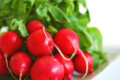 Bunch of red ripe radish. Shot of a bunch of red ripe radish Royalty Free Stock Image