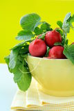 Bunch of red ripe radish Stock Images