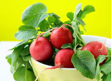 Bunch of red ripe radish Royalty Free Stock Photography