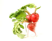 Bunch of red ripe radish Royalty Free Stock Images
