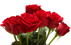 Bunch of Red Roses. Bunch of Beautiful Red Roses Royalty Free Stock Photography