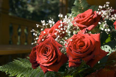 Bunch of red roses. At sunlight Royalty Free Stock Photo
