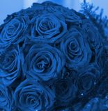 Bunch of red roses. (toned in blue Royalty Free Stock Images