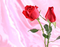Bunch of red roses Stock Images