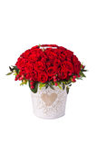 Bunch red roses in bucket. Isolated on white background Stock Photo