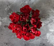A bunch of red roses Stock Photos