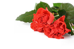 Bunch of red roses with copyspace Royalty Free Stock Photo