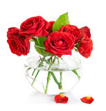 Bunch red roses in glass vase. On white background Royalty Free Stock Photos