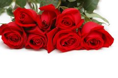 Bunch of red roses isolated Royalty Free Stock Photography