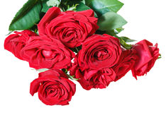 Bunch of red roses isolated on white Royalty Free Stock Photos