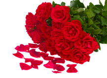 Bunch of red roses with petals Royalty Free Stock Photos