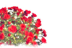 Bunch of red roses on white background. Digital painting Royalty Free Stock Photo