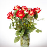 Bunch of red roses on white background stock images