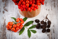 Bunch of red rowan with leaves and alder cone on rustic wooden background Stock Photos