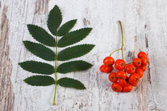 Bunch of red rowan with leaves on rustic wooden background Royalty Free Stock Images