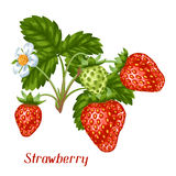 Bunch of red strawberries. Decorative berries and leaves.  Stock Photography