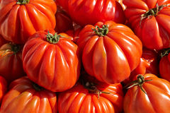 Bunch of red tomato RAF Stock Image