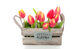A bunch of red tulips Stock Photo