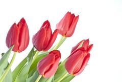 Bunch of Red Tulips Stock Images