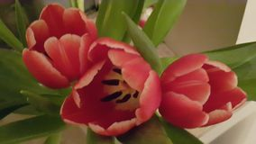 Bunch of red tulips Stock Photo