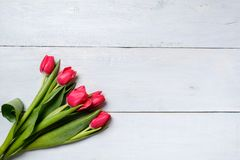 Bunch of red tulips on blue wooden table. Banner mockup card with copy space for congratulation, woman or mother day, easter, spri. Ng holiday, birthday royalty free stock image