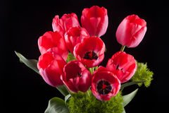 Bunch of red tulips Royalty Free Stock Image