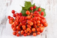 Bunch of red viburnum with leaves on rustic old board Stock Photo