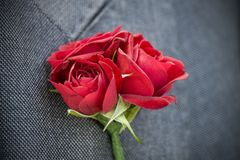 Bunch of red wedding rose flowers boutonnière pinned to grey suit jacket royalty free stock images