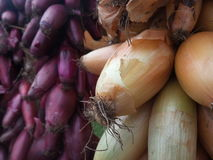 Bunch of red and white onion Royalty Free Stock Photo