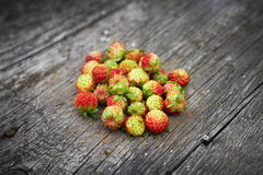 Bunch of red wild strawberry Royalty Free Stock Photo
