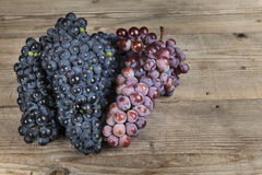Bunch of red wine grape Royalty Free Stock Photos